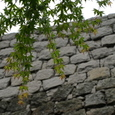 019_朝露の城下